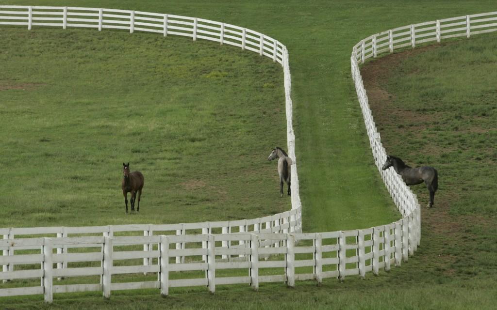 Lexington, Kentucky horse country